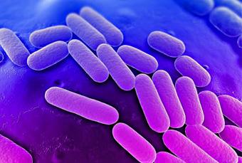 Klebsillia bacterie