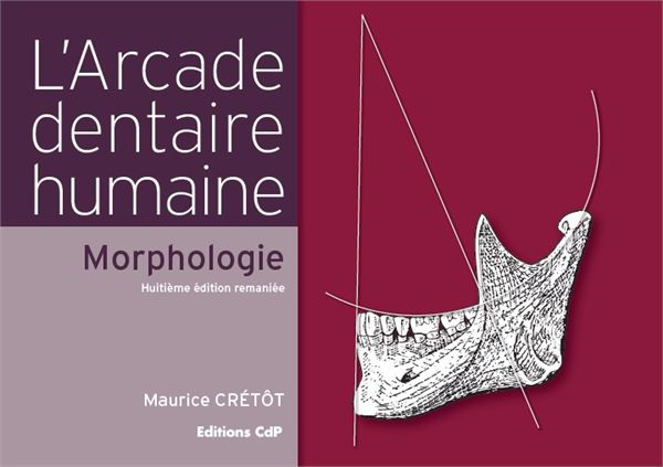 L'Arcade dentaire humaine